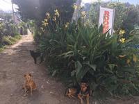 スリランカの野良犬たち - ドイツの陽だまり