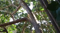 ネズミモチの剪定 - うちの庭の備忘録 green's garden