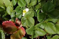 春の庭 - 花・あれこれ