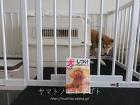 犬の本【犬のしつけパーフェクトBOOK】 - yamatoのひとりごと
