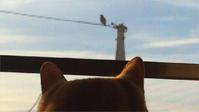 新着 🐾 SKY WITH A CAT 🐱 猫と暮らす とら猫JOY(ΦωΦ) - The SKY - Timelapse. :: 猫と暮らす(ΦωΦ)