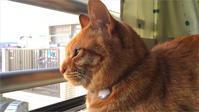 笑ったら負けよ!かぶり物3番勝負! 🐱 SIMPLE TABBY CAT. - The SKY - Timelapse. :: 猫と暮らす(ΦωΦ)