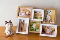 トラの写真を飾りました - 猫と夕焼け