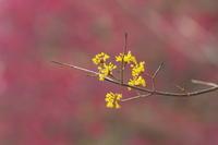黄色い花 - tokoのblog