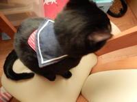 我が家のJKたち - 愛犬家の猫日記
