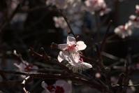 春を一瞬 - 京都ときどき沖縄ところにより気まぐれ
