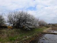 春になりました - pottering