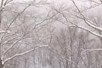 20180312 【雪山ハイク】ここはまだ冬 - 杉本敏宏のつれづれなるままに