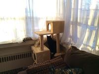 ネコと朝日 - にゃんこと暮らす・アメリカ・アパート(その2)