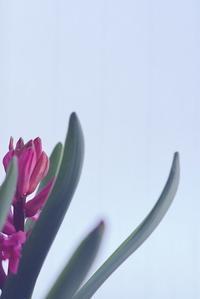 ギリシャ神話の花 - 美は観る者の眼の中にある