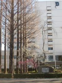 獨協大学と草加松原団地の変貌 - 活花生活(2)
