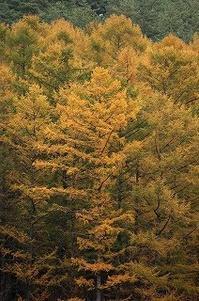 うちのまわりの 秋の色 - 空ヤ畑ノコトバカリ