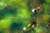 フィルター - Diving Life ~Aita pe'a pe'a~