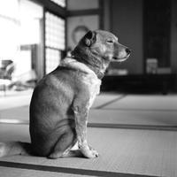 2010年1月と2012年8月の老犬ゲン - 照片画廊