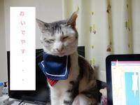 白梅 - 愛犬家の猫日記
