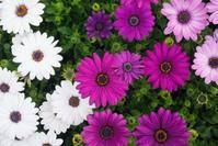 春だから新しい事をしたい気持ちになるその前に・・・ - アラサーからの人生再建プロジェクト~遅咲きのセオリー~