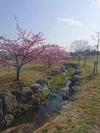 ねんきんQuiz-第494問(カラ期間) - 松浦貴広のねんきんブログ