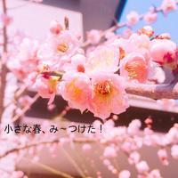 小さな春、み〜つけた! - Natural-Rhythm~ナチュラリズム:アロマとハーブで穏やかな暮らし~