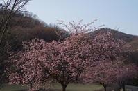 春の三毳山散策 - 季節の風を追いかけて