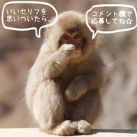 BOKE Photo - なちゅフォト