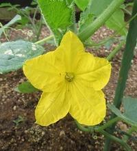 園芸療法の時間:チューリップの寄せ植えをしました - デイサービス奈の花ブログ
