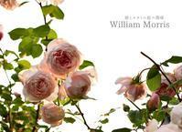 かけがえのない薔薇 - 彼とカヲリの庭の関係