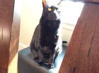 ネコ: 日向ぼっこ、再び - にゃんこと暮らす・アメリカ・アパート(その2)