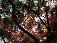 それぞれの場所で咲く花々 - ほんこん どんなん  ~ My Hometown is HK ~