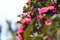 春の気配と・・・。 - 今日の空+α2