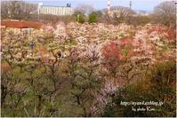 賑わう大阪城公園 - 4にゃん日記+