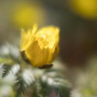 早春の黄色 - この道は風なり