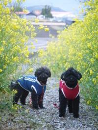 菜の花散歩♪ - ほっとひと息