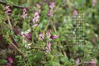 いま - 花の咲み、花のうた、きらめく地上 ―― photo&poem gallery kanon