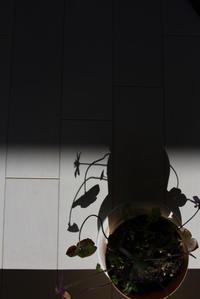 ヒカリと影 - (=^・^=)の部屋 写真館