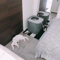 猫1:2=トイレ - necoとシンプルインテリア