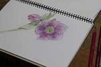 色鉛筆で - 絵画制作日記