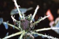 3.15 - anemone