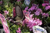 目に見えて明らか、春便り! - 手柄山温室植物園ブログ 『山の上から花だより』
