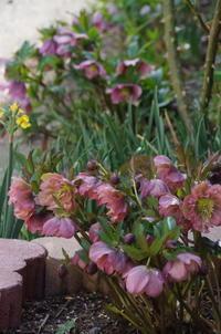 マイガーデンの色とりどりの花 - 季節の風を追いかけて