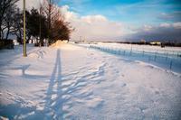 冬の影 - 日々是好日 Here comes the sun.