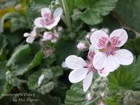Spring has come. - Gardener*s Diary