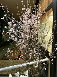 祝・10周年!!(1802再訪)──「傳」@外苑前 - Welcome to Koro's Garden!