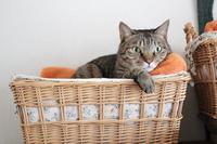 ひとりでいたい猫と一緒にいたい猫 - きょうだい猫と仲良し暮らし