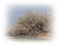 白梅と菜の花と五重塔 - ひとりあそび