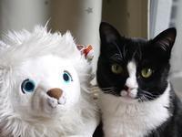 猫のお留守番 ふぅちゃん編。 - ゆきねこ猫家族