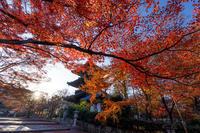 京都の紅葉2017 真如堂の残り紅葉 - 花景色-K.W.C. PhotoBlog