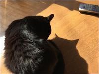 影とおしゃべり - あずきのばあばの、のんびり日記
