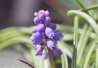 春の庭の展開記録 - 静かに過ごす部屋