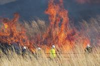 仙石原すすき草原の山焼き - エーデルワイスPhoto