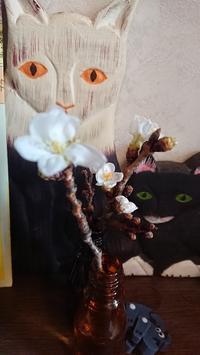 開花宣言 - A DAY IN THE LIFE/猫屋敷の日常